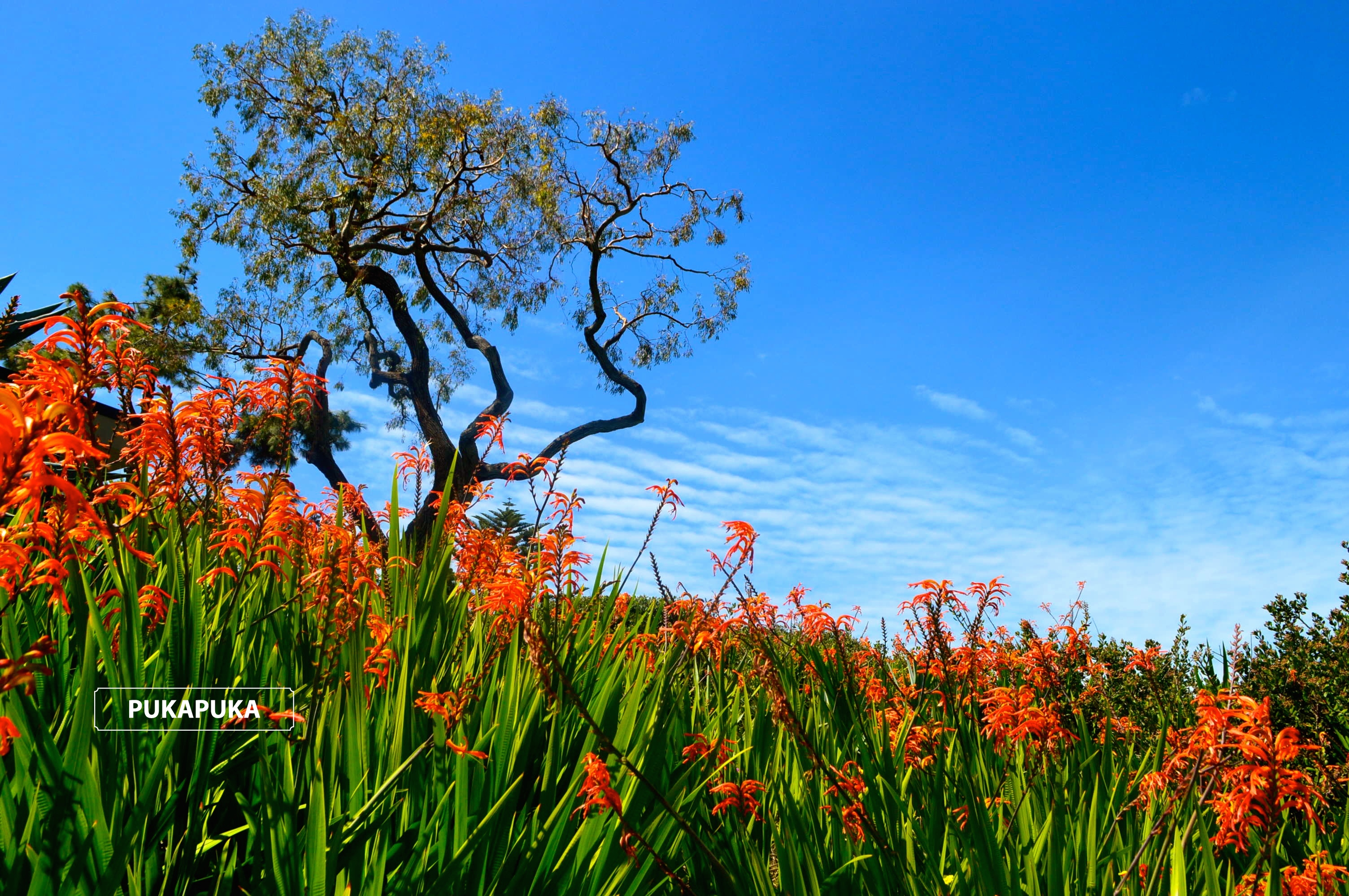 wiosna w Kalifornii