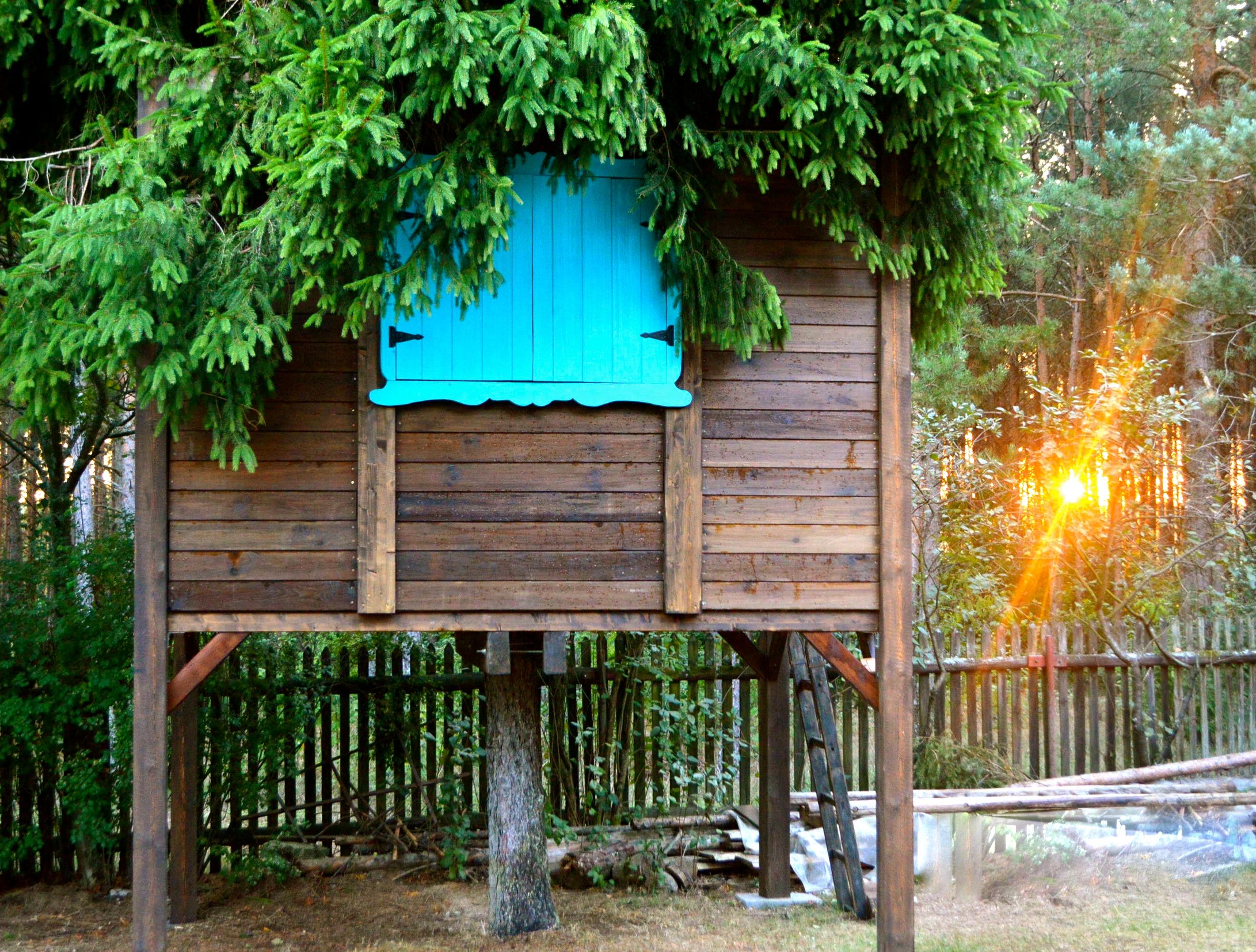domek na drzewie